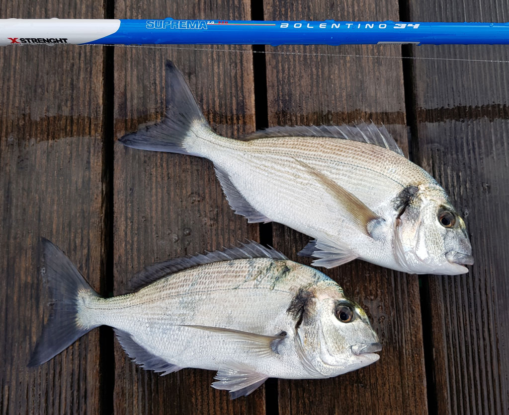pesca con spotlock