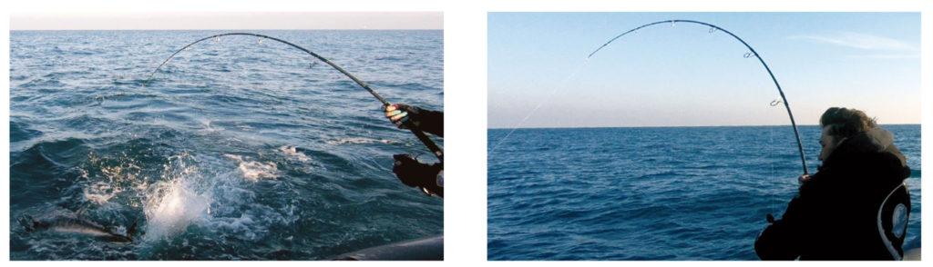 tonni pesca