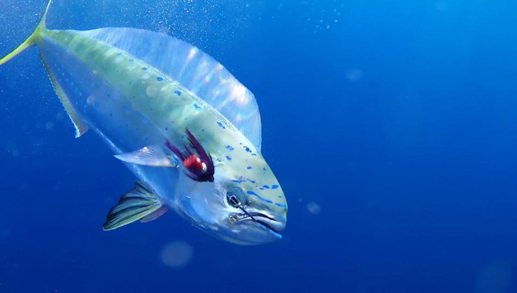 cilento subacquea