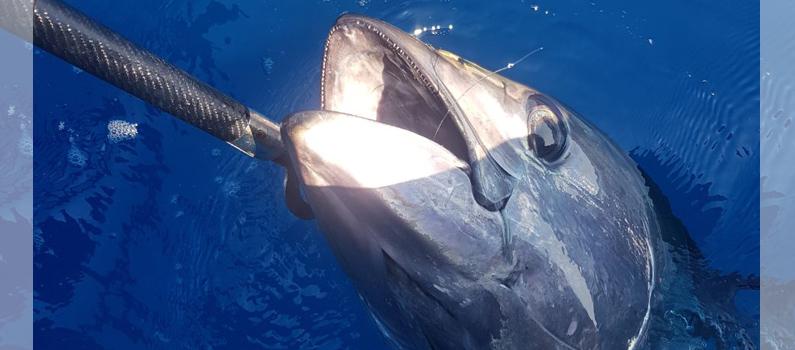 Non solo tonni