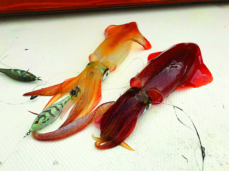 calamari a tataki